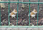 1st Try Surgically Altered Squirrel Stereo Art