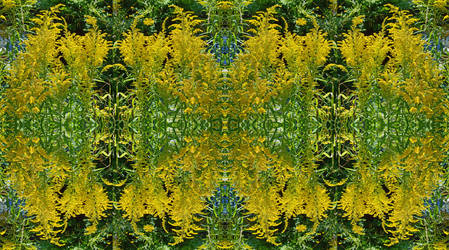 Hayfever Nightmare In Stereoscopic Pair 3-D