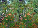 Ericaceous Shrub Stereoscopic Watercolour