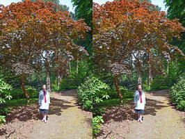 Mrs a* With One Of Our Favourite Japanese Maples