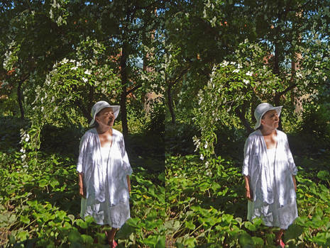 Heathfield Woodland Mrs a* Under The Dogwood Tree