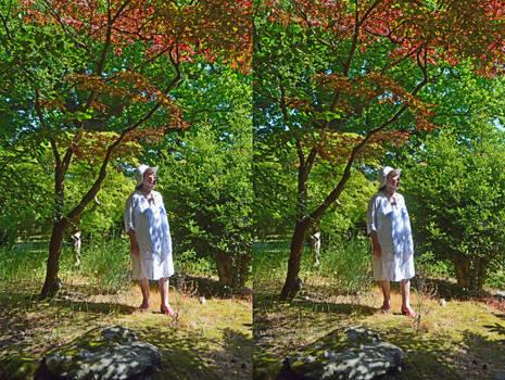 The Heathfield Maple Grove In Happier Days