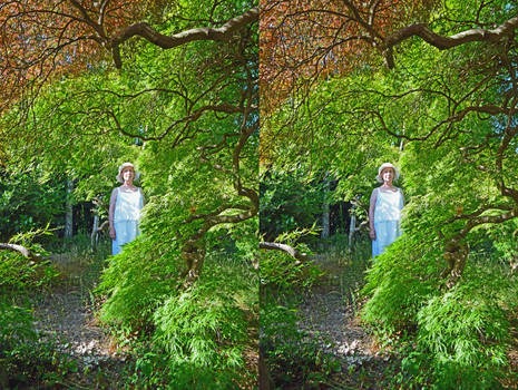 Heathfield Maple Grove Dryad Stereoscopic Painting