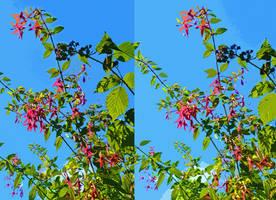Gazing Prophetically Into The Fuchsia