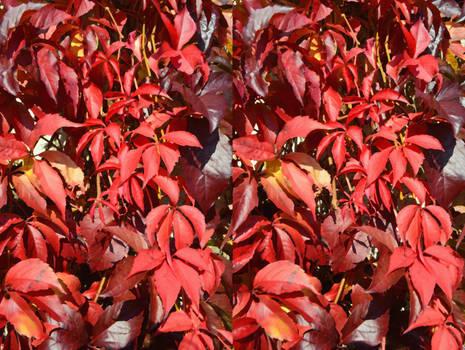 Autumnal Fire Falls In A Walled Garden