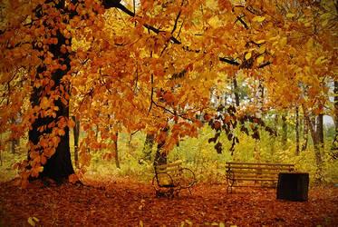 autumn by jullianoart