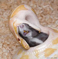 8.Tiger python_attack by Bullter