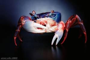 192.Rainbow crabs