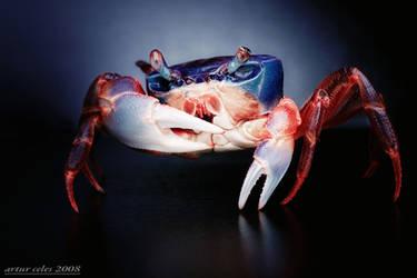 192.Rainbow crabs by Bullter