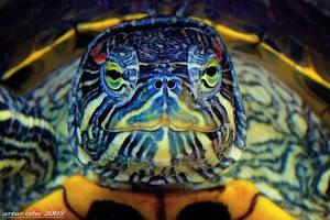 2.Colourful turtle