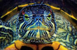 2.Colourful turtle by Bullter