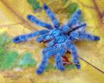 352. Blue diamond by Bullter