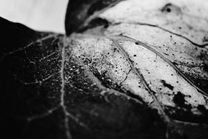 Spider Veins by xalatarielx