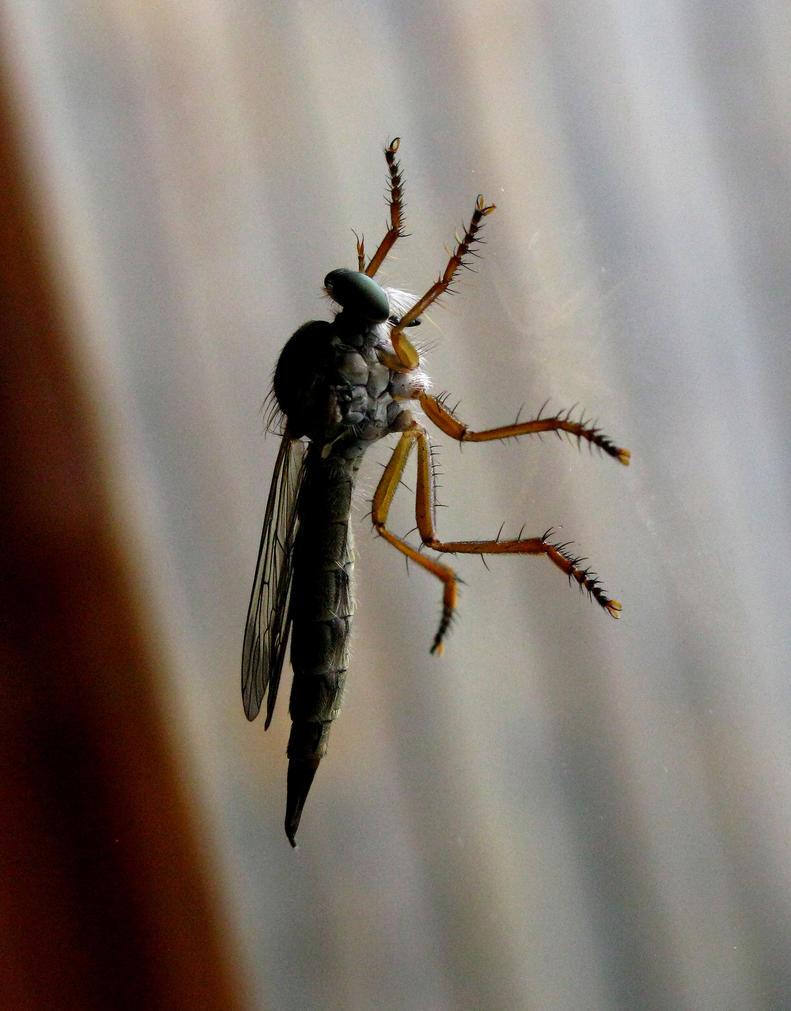 Little dragonfly by UomoAnalogico