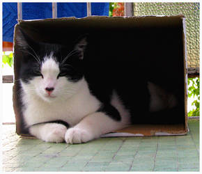 The cat and your box