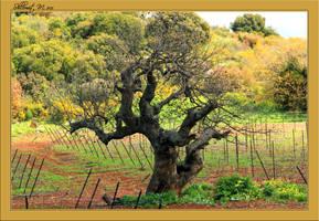 Tree in a field by ShlomitMessica