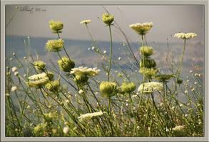 Plants near the lake by ShlomitMessica