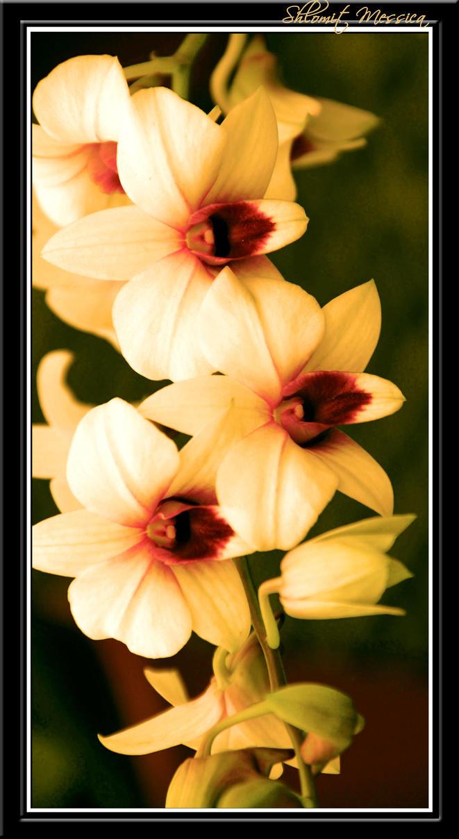 For Jocelyne by ShlomitMessica