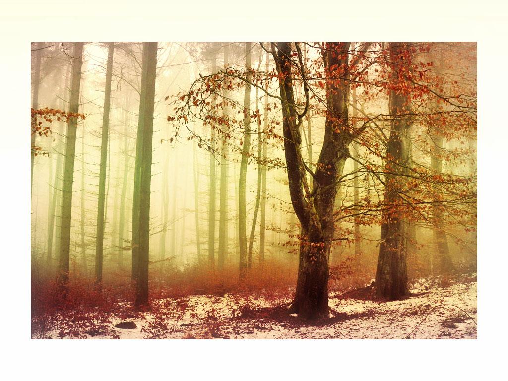 Trees in winter fog by ShlomitMessica