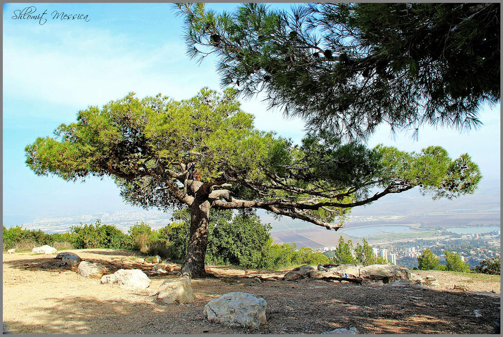 On mount Carmel by ShlomitMessica