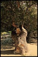 A tree to hug by ShlomitMessica