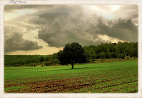 Green fields by ShlomitMessica