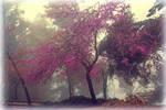 Tree in haze