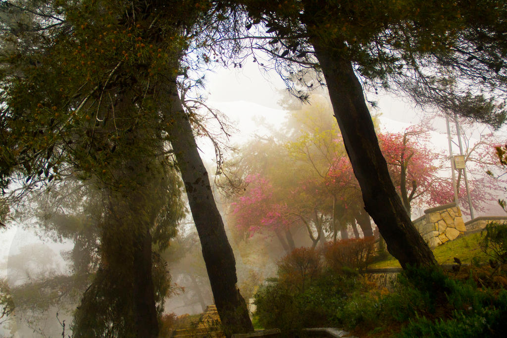 Colors in the haze by ShlomitMessica