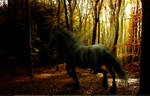 Friesian in a Forest