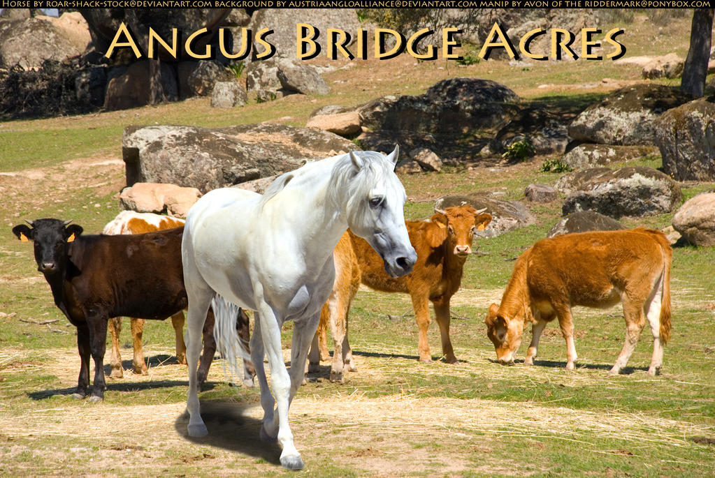 For Angus by Avon-Stock