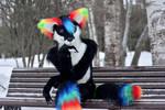 Benjiro - the rainbow fox - 3