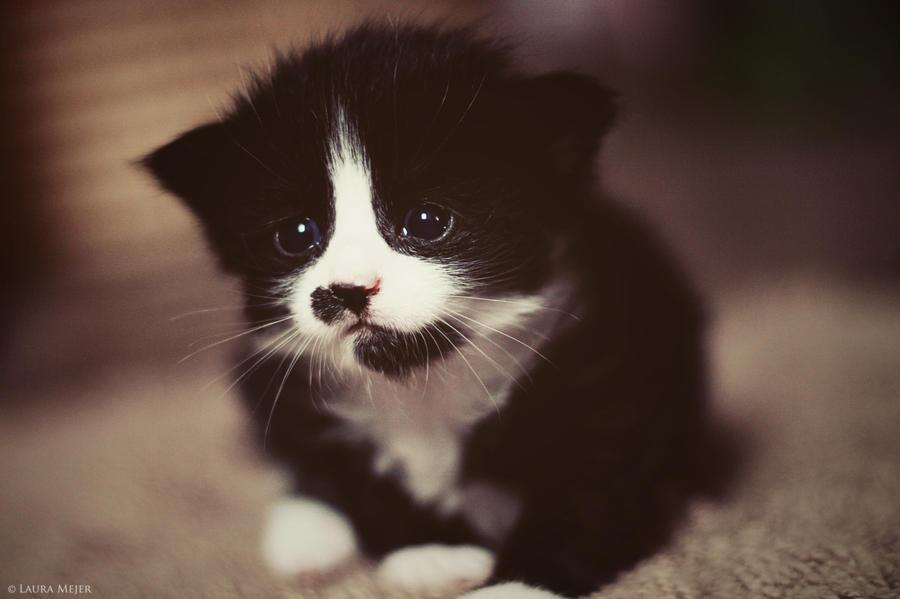 Kitten by lauramejer