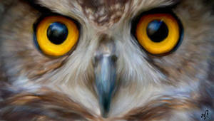 Owl_Oil by Beltainewolf
