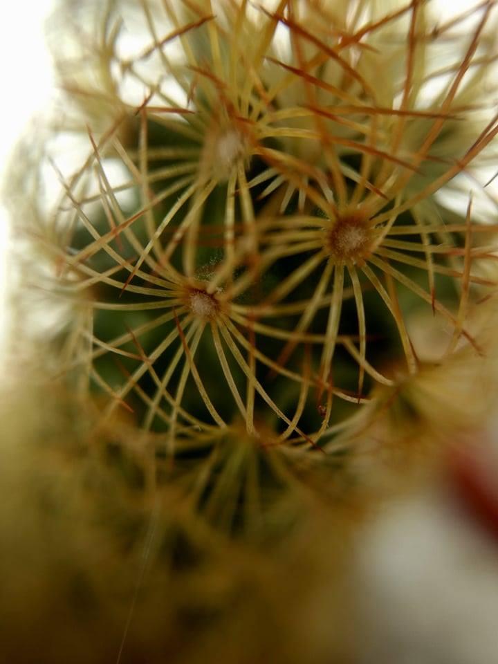 Spiky II by YO-TUKA-09