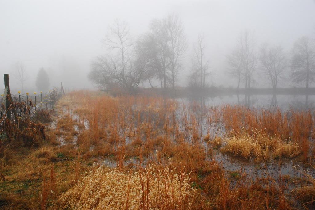 Fog 12 by lumibear