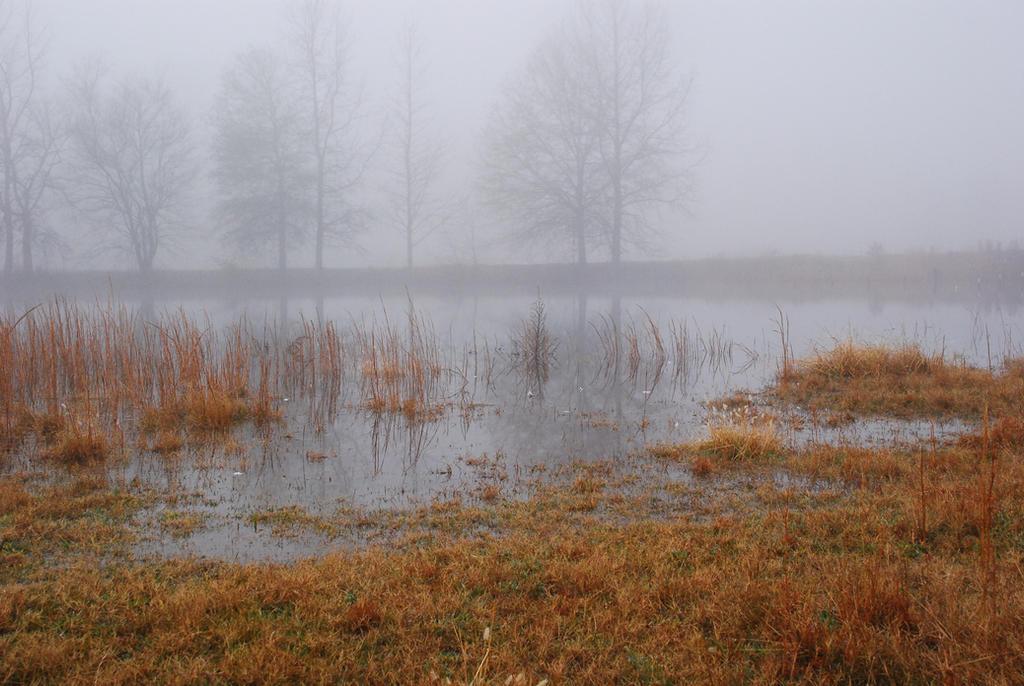 Fog 26