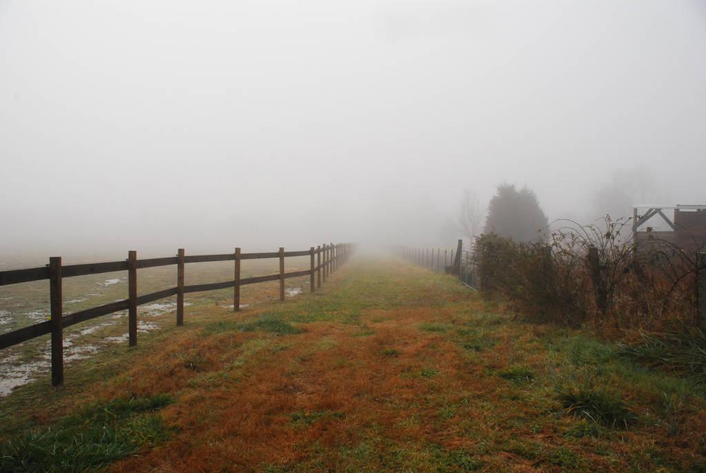 Fog 29 by lumibear