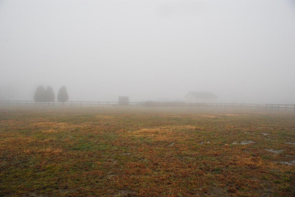 Fog 34 by lumibear