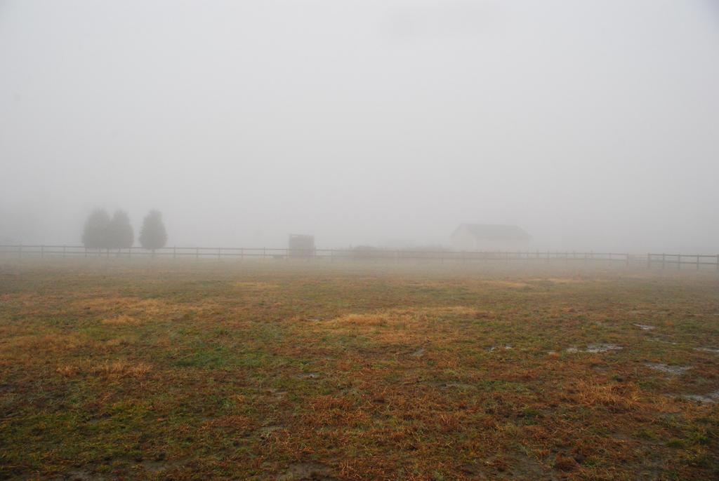 Fog 34