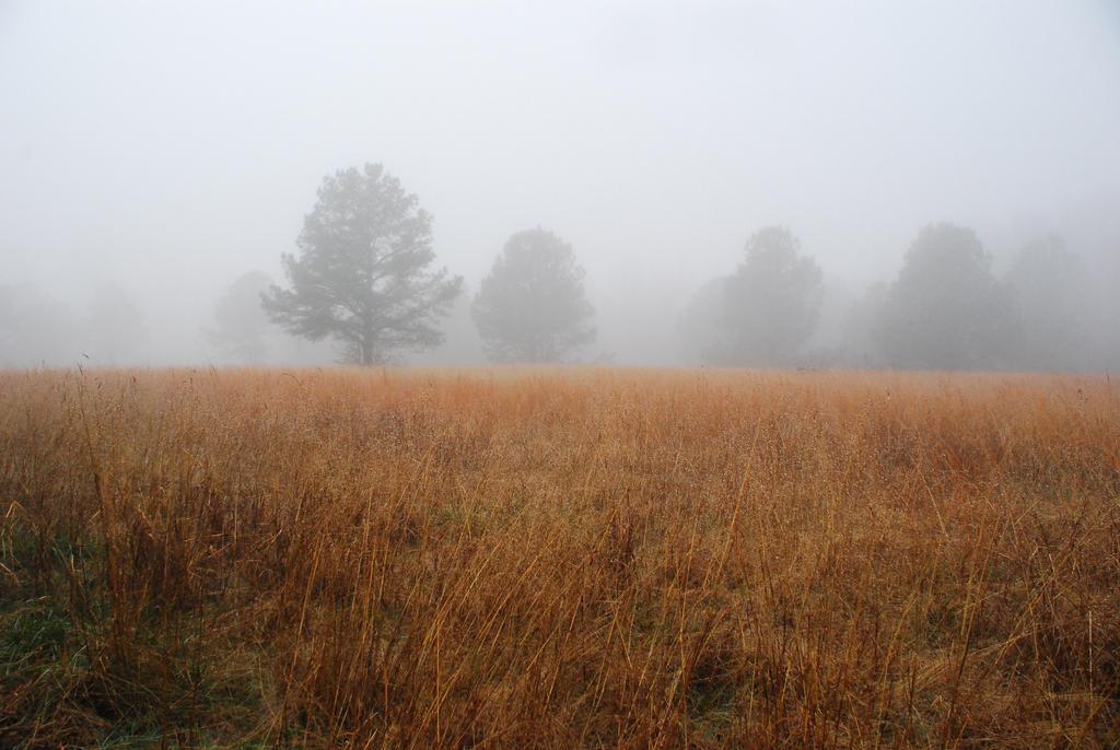 Fog 41