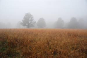 Fog 41 by lumibear