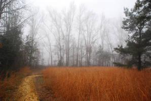Fog 46 by lumibear