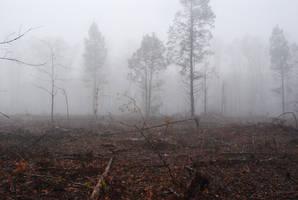 Fog 47 by lumibear