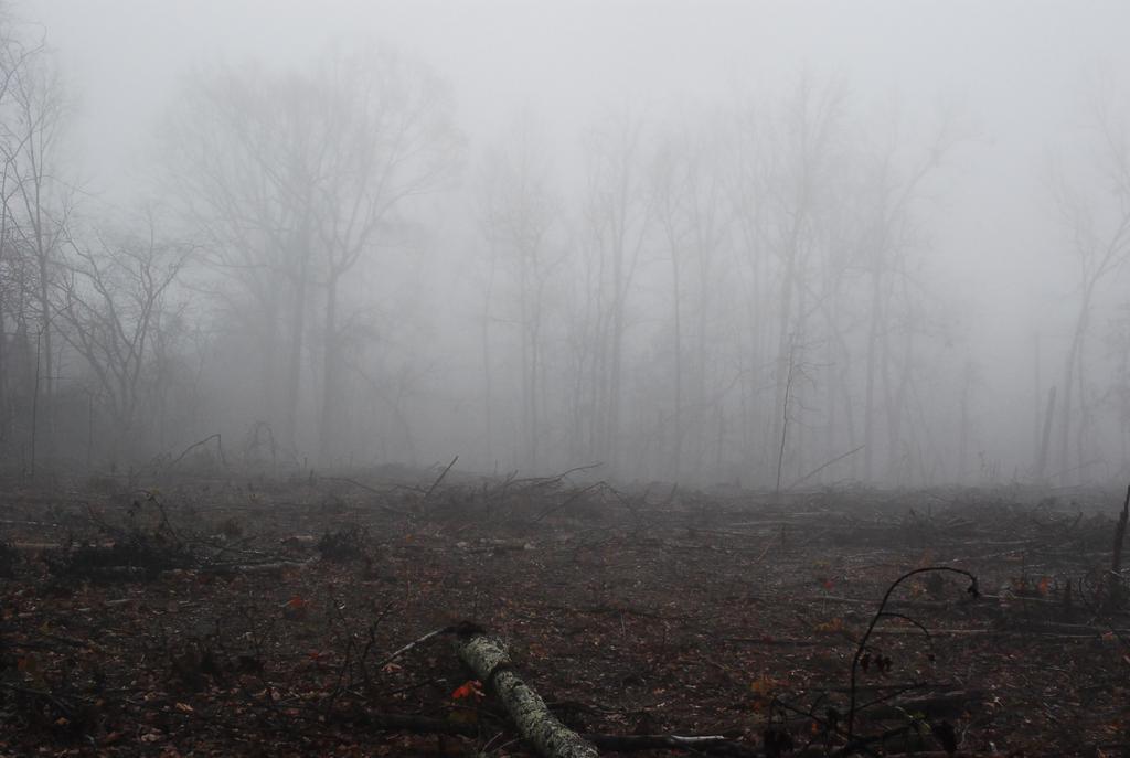 Fog 49 by lumibear