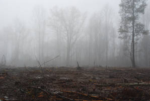 Fog 51 by lumibear