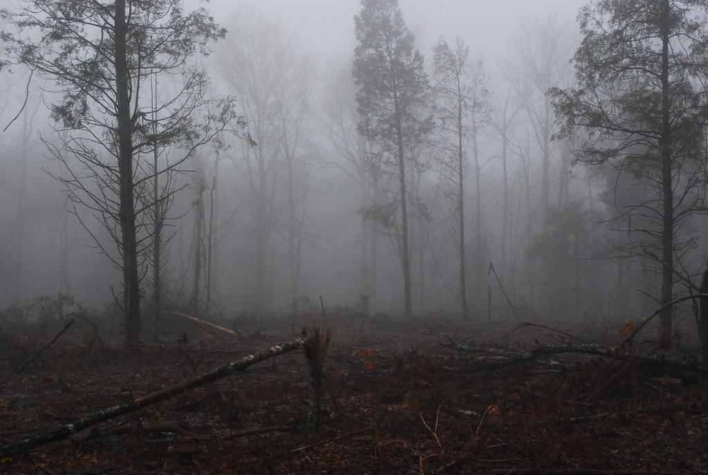 Fog 57 by lumibear