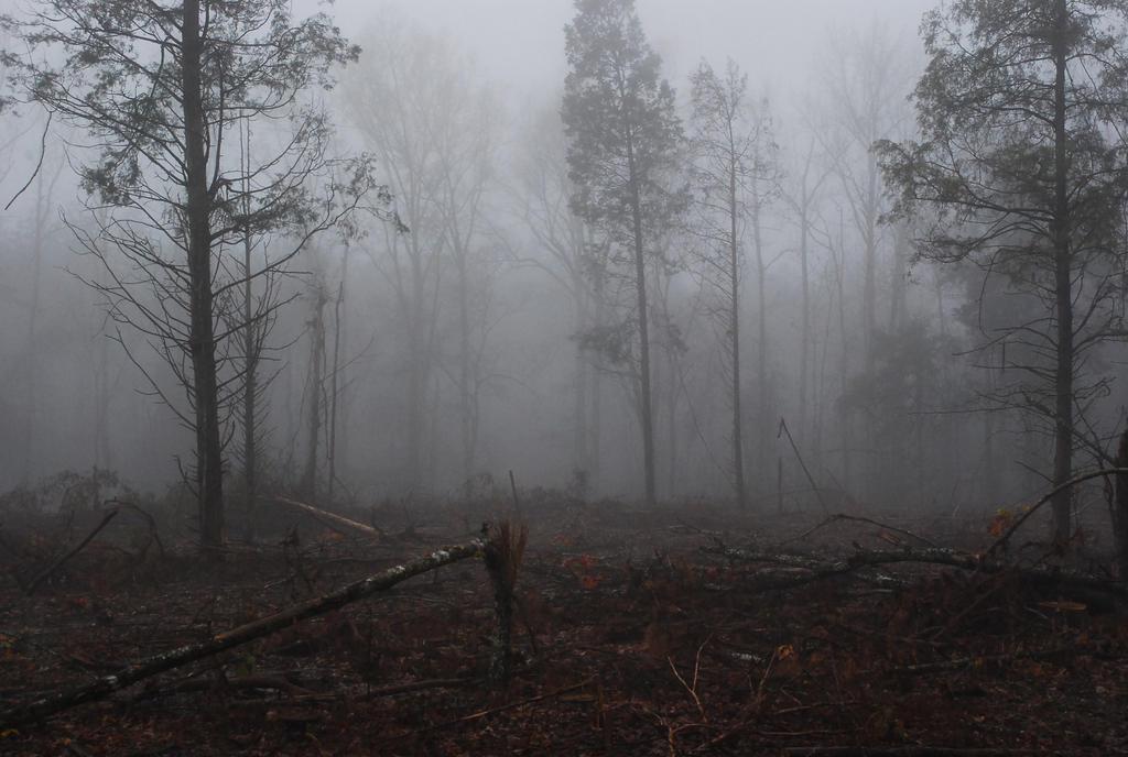 Fog 57