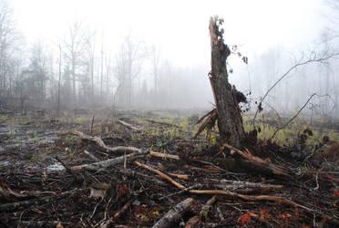 Fog 67 by lumibear