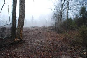 Fog 73 by lumibear