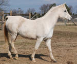 New Horses 27